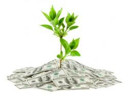 moneytree-126966352_thumb