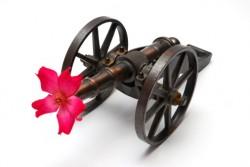 flowercannon-116856695_thumb